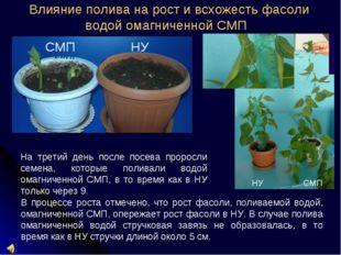 Влияние полива на рост и всхожесть фасоли водой омагниченной СМП В процессе р