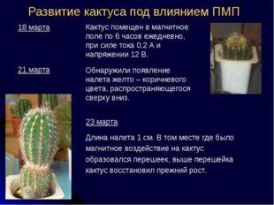 Развитие кактуса под влиянием ПМП Длина налета 1 см. В том месте где было маг