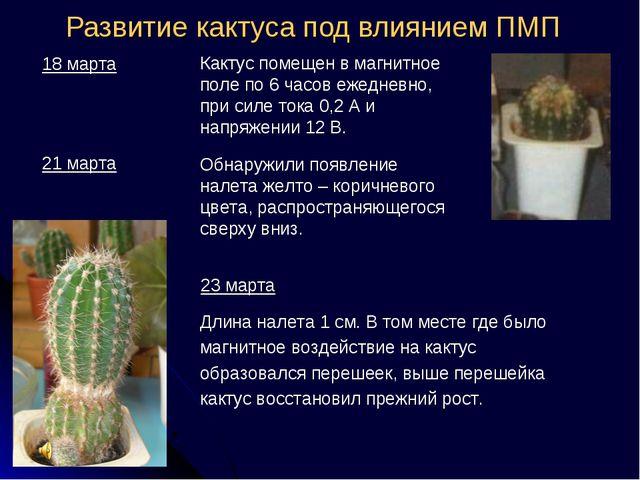 Развитие кактуса под влиянием ПМП Длина налета 1 см. В том месте где было маг...