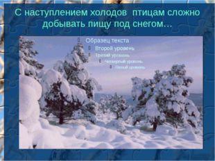 С наступлением холодов птицам сложно добывать пищу под снегом…