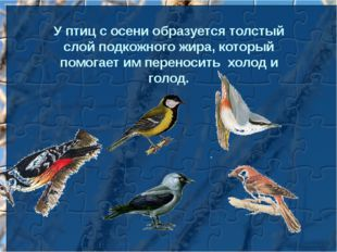 У птиц с осени образуется толстый слой подкожного жира, который помогает им п