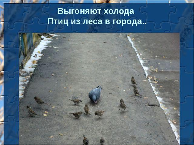 Выгоняют холода Птиц из леса в города..