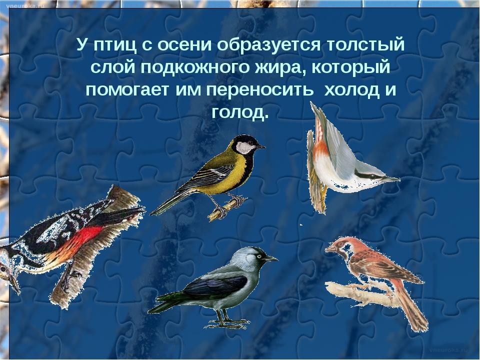 У птиц с осени образуется толстый слой подкожного жира, который помогает им п...