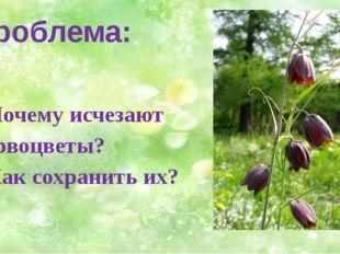 Проблема: 1. Почему исчезают первоцветы? 2. Как сохранить их?