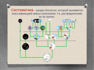 Систематика – раздел биологии, который занимается классификацией живых органи