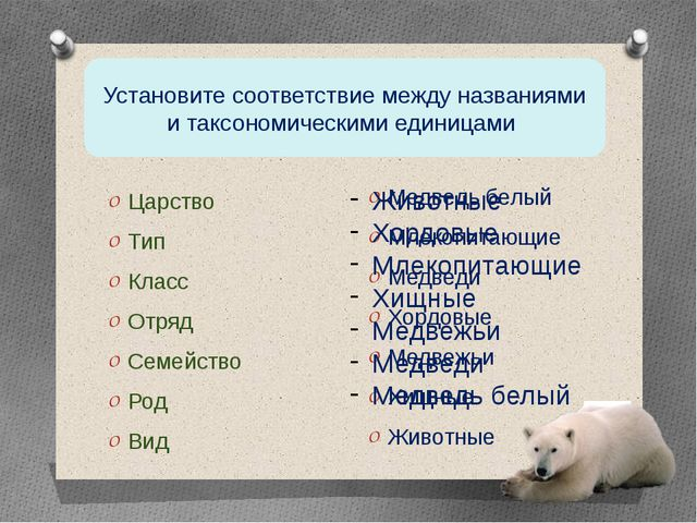 Царство Тип Класс Отряд Семейство Род Вид Медведь белый Млекопитающие Медведи...