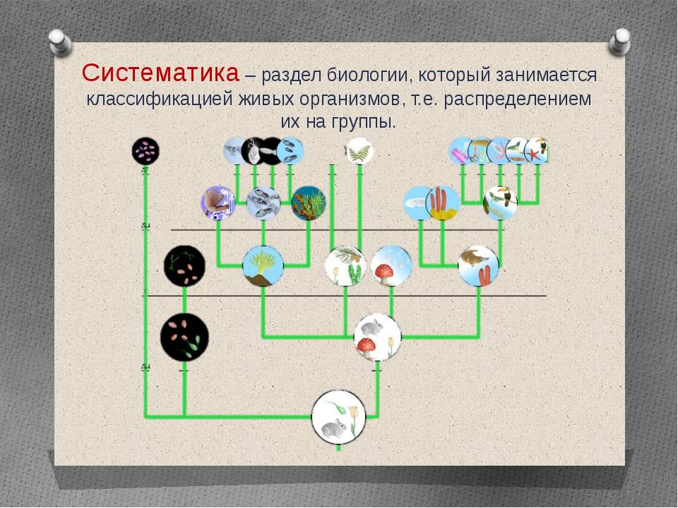 Систематика – раздел биологии, который занимается классификацией живых органи...