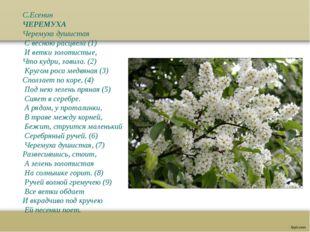 С.Есенин ЧЕРЕМУХА Черемуха душистая С весною расцвела (1) И ветки золотистые,
