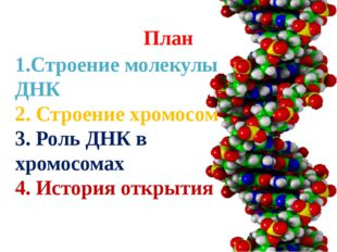 План 1.Строение молекулы ДНК 2. Строение хромосом 3. Роль ДНК в хромосомах 4.
