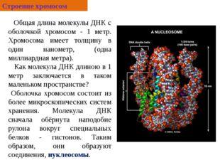 Общая длина молекулы ДНК с оболочкой хромосом - 1 метр. Хромосома имеет толщ