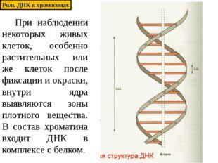 При наблюдении некоторых живых клеток, особенно растительных или же клеток п