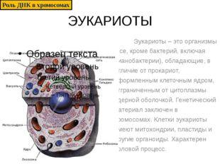 ЭУКАРИОТЫ Эукариоты – это организмы (все, кроме бактерий, включая цианобактер