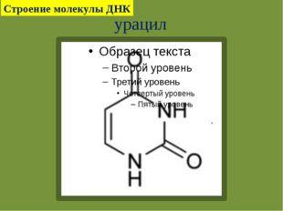 урацил Строение молекулы ДНК