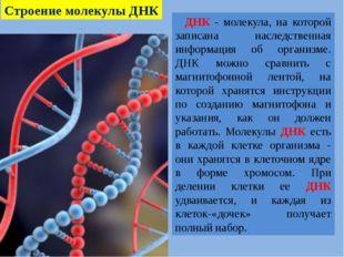 ДНК - молекула, на которой записана наследственная информация об организме.