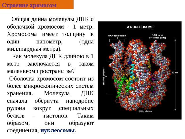 Общая длина молекулы ДНК с оболочкой хромосом - 1 метр. Хромосома имеет толщ...