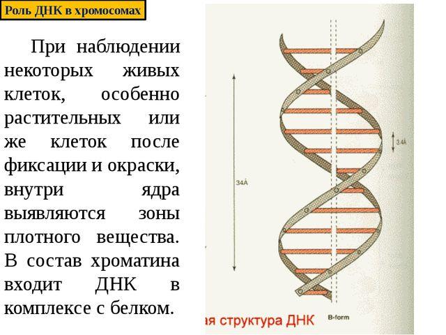 При наблюдении некоторых живых клеток, особенно растительных или же клеток п...