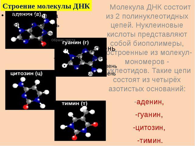 Молекула ДНК состоит из 2 полинуклеотидных цепей. Нуклеиновые кислоты предст...