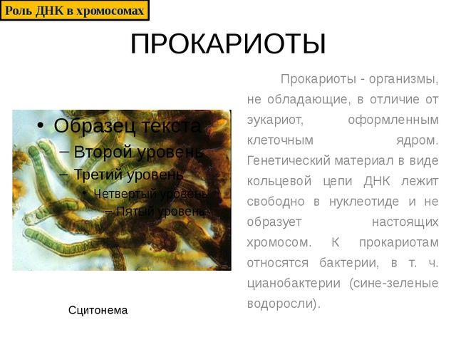 ПРОКАРИОТЫ Прокариоты - организмы, не обладающие, в отличие от эукариот, офор...