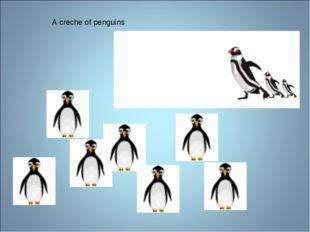 A creche of penguins