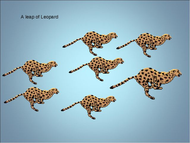 A leap of Leopard