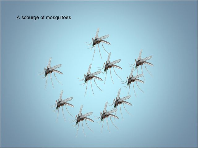 A scourge of mosquitoes
