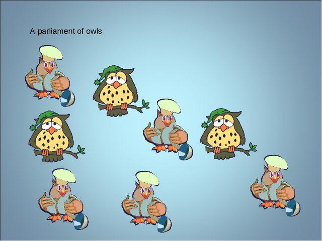 A parliament of owls