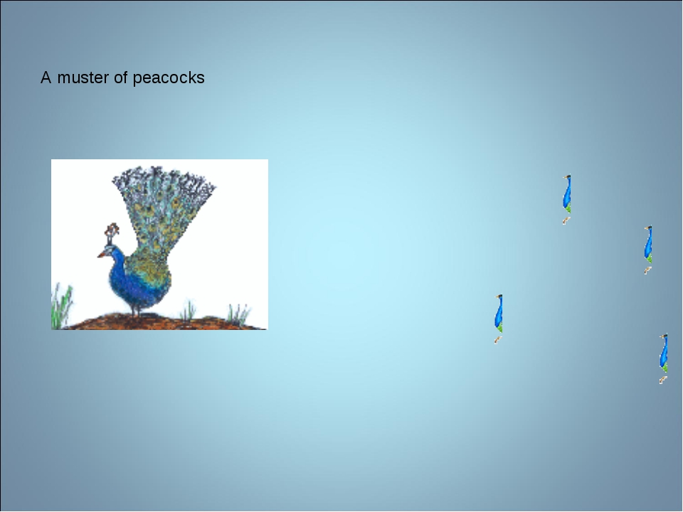 A muster of peacocks