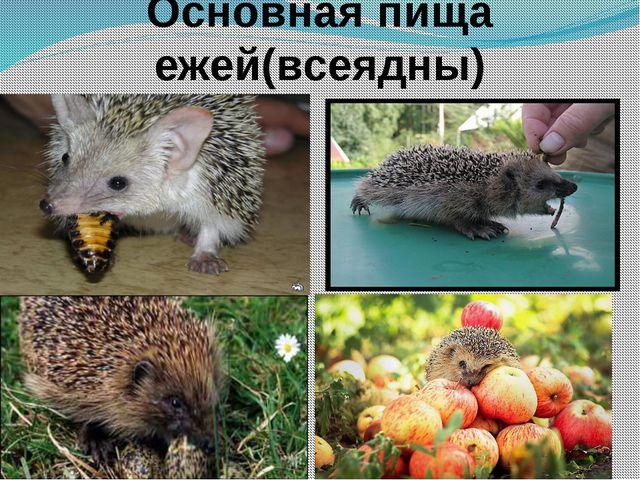 Основная пища ежей(всеядны)