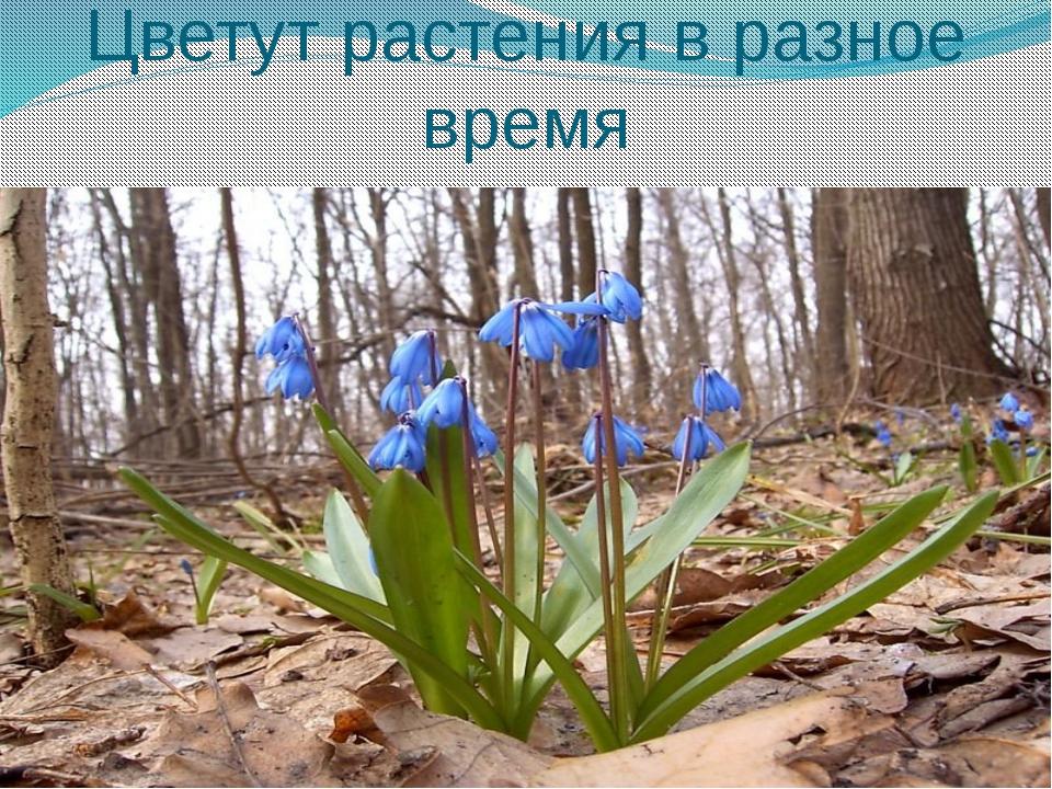 Цветут растения в разное время