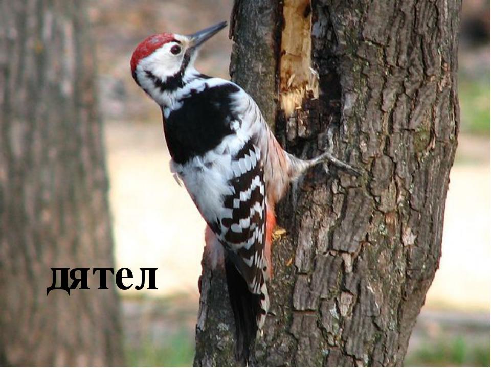 Птицы, которые питаются насекомыми зяблик щегол пищуха дятел
