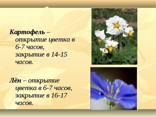 Картофель – открытие цветка в 6-7 часов, закрытие в 14-15 часов. Лён – откры...