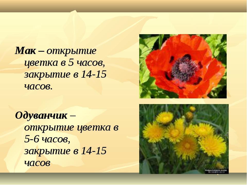 Мак – открытие цветка в 5 часов, закрытие в 14-15 часов. Одуванчик – открыти...
