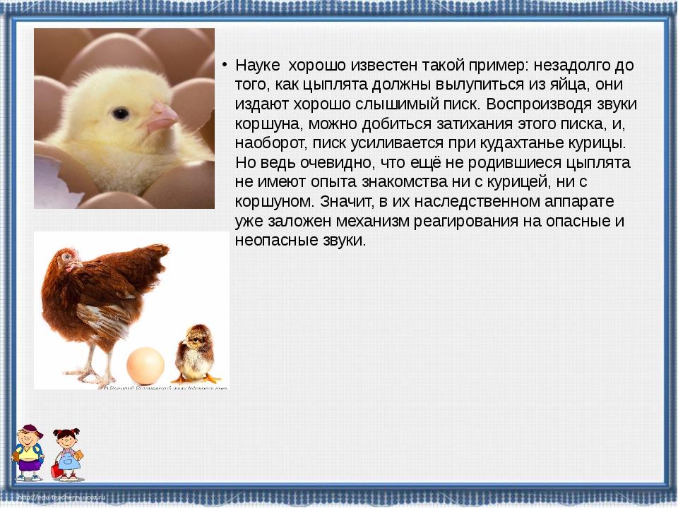 Науке хорошо известен такой пример: незадолго до того, как цыплята должны выл...