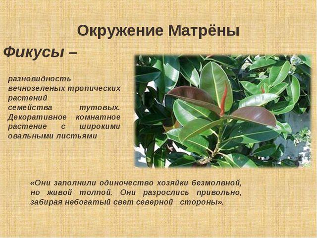 Окружение Матрёны разновидность вечнозеленых тропических растений семейства...