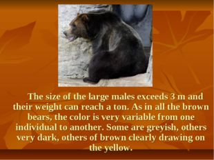 The size of the large males exceeds 3 m and their weight can reach a ton. As