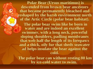 Polar Bear (Ursus maritimus) is descended from brown bear ancestors that bec