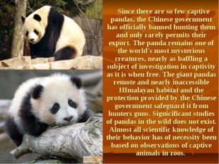Since there are so few captive pandas, the Chinese government has officially