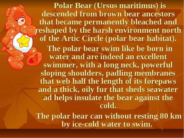 Polar Bear (Ursus maritimus) is descended from brown bear ancestors that bec...