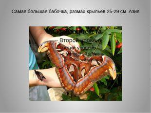 Самая большая бабочка, размах крыльев 25-29 см. Азия
