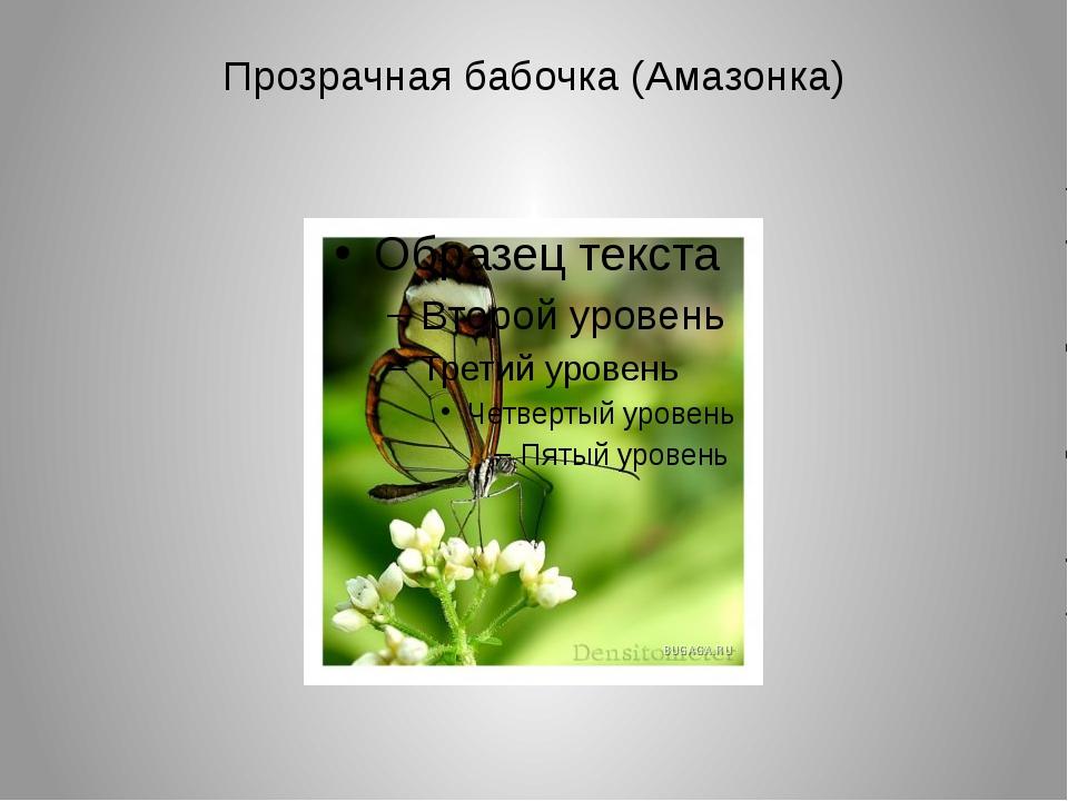 Прозрачная бабочка (Амазонка)