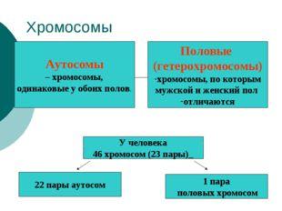 Хромосомы Аутосомы – хромосомы, одинаковые у обоих полов. Половые (гетерохром