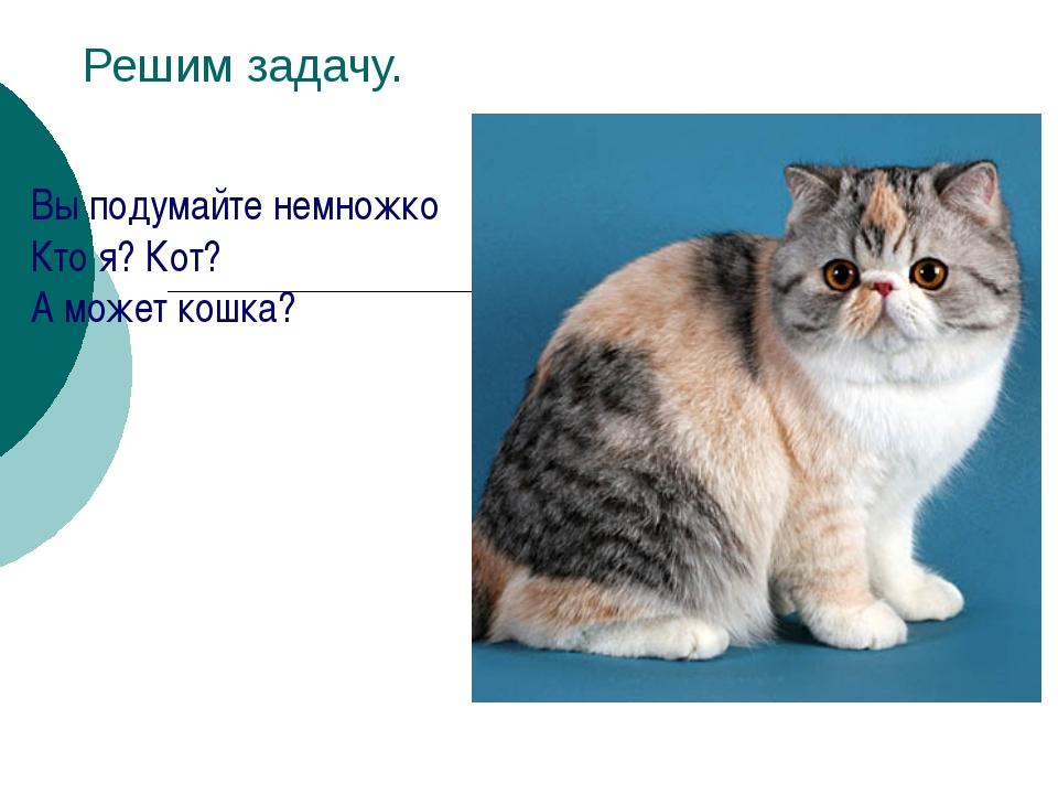 Решим задачу. Вы подумайте немножко Кто я? Кот? А может кошка?