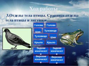 Ход работы 3.Отделы тела птицы. Сравните отделы тела птицы и лягушки Голова Ш