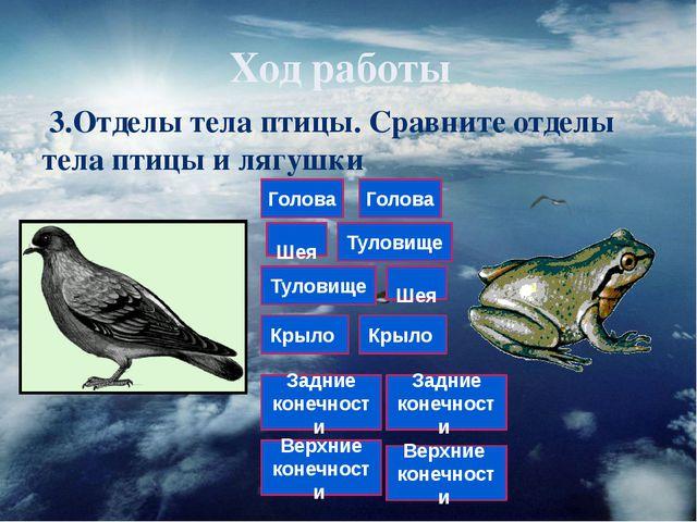 Ход работы 3.Отделы тела птицы. Сравните отделы тела птицы и лягушки Голова Ш...
