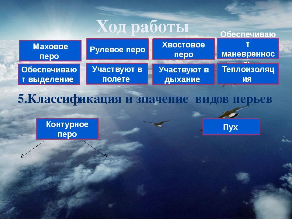 Ход работы 5.Классификация и значение видов перьев Контурное перо Пух Маховое...