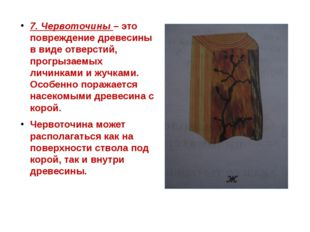 7. Червоточины – это повреждение древесины в виде отверстий, прогрызаемых лич