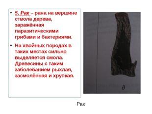 Рак 5. Рак – рана на вершине ствола дерева, заражённая паразитическими гриба