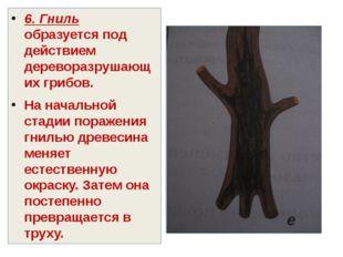 6. Гниль образуется под действием дереворазрушающих грибов. На начальной стад