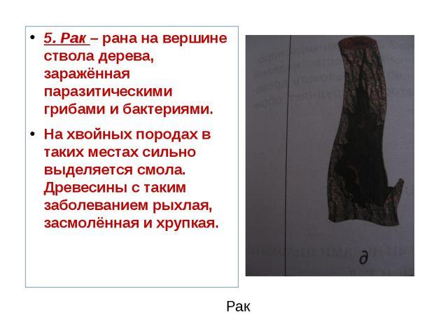 Рак 5. Рак – рана на вершине ствола дерева, заражённая паразитическими гриба...