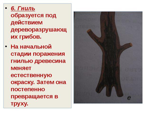 6. Гниль образуется под действием дереворазрушающих грибов. На начальной стад...